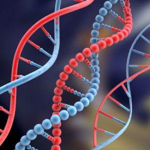 Luyện thi đại học KIT-1: Môn Sinh học (Thầy Nguyễn Quang Anh) :  Bài 8. Phương pháp giải bài tập về di truyền phân tử