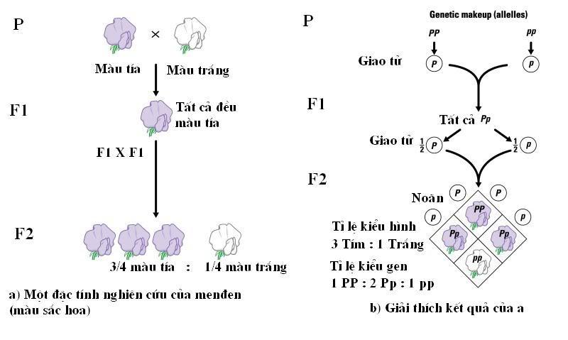 Luyện thi quốc gia PEN-C: Môn Sinh học (Thầy Nguyễn Quang Anh) :  Phương pháp giải bài tập về di truyền phân li