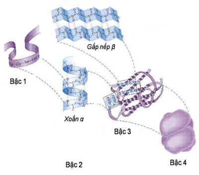 Các vấn đề về gen và mã di truyền
