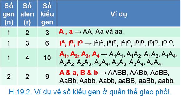 Luyện thi đại học KIT-1: Môn Sinh học (Thầy Bùi Phúc Trạch) :  Bài 2. Cấu trúc di truyền của quần thể ngẫu phối