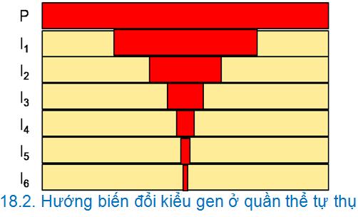 Luyện thi đại học KIT-1: Môn Sinh học (Thầy Bùi Phúc Trạch) :  Cấu trúc di truyền của quần thể tự phối