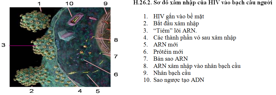Luyện thi đại học KIT-1: Môn Sinh học (Thầy Bùi Phúc Trạch) :  Bài 3. Bảo vệ vốn gen loài người