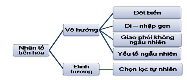 Luyện thi đại học KIT-1: Môn Sinh học (Thầy Bùi Phúc Trạch) :  Bài 3. Học thuyết tiến hóa hiện đại