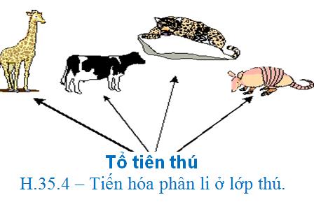 Luyện thi quốc gia PEN-C: Môn Sinh học (Thầy Bùi Phúc Trạch) :  Bài 9. Tiến hóa lớn